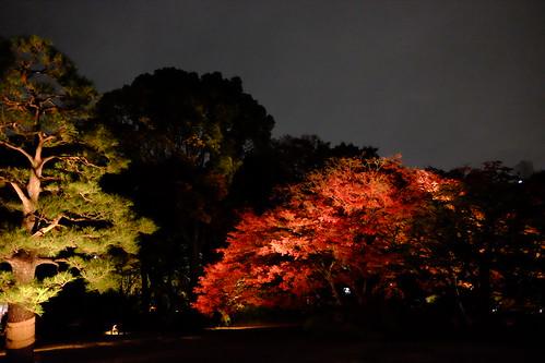 RIKUGIEN Colored Leaves light up 2016 03