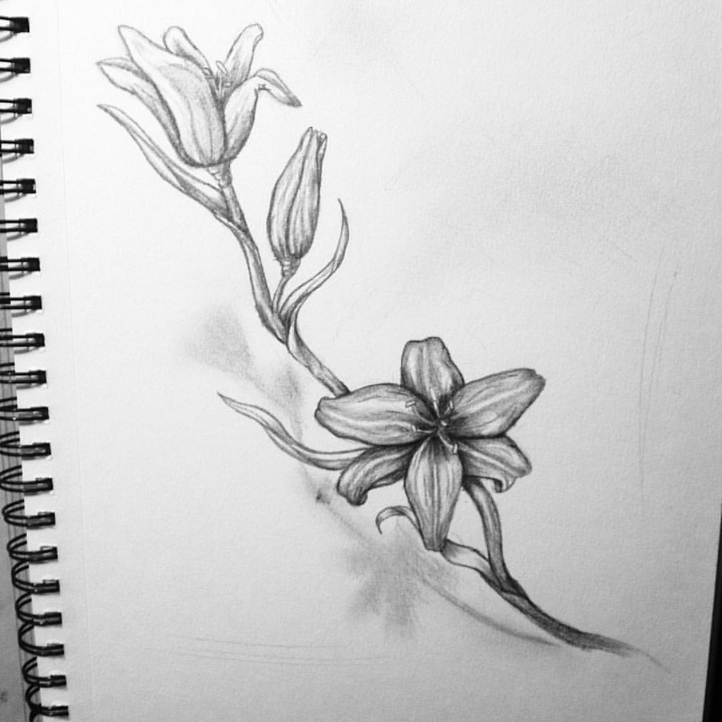 A lily drawing ive been working on during the cheifs game flickr creativecanvastattoo a lily drawing ive been working on during the cheifs game creativecanvastattoo izmirmasajfo