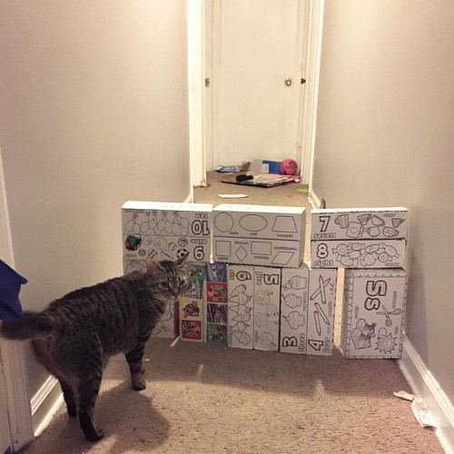 Somebody built a wall. I guess we do need to worry about feline immigration. | by deew27