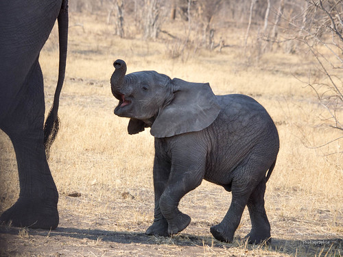 Elefantennachwuchs