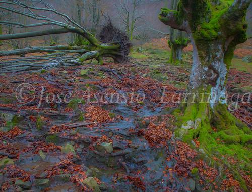 Parque natural de Gorbeia #DePaseoConLarri #Flickr      -2084
