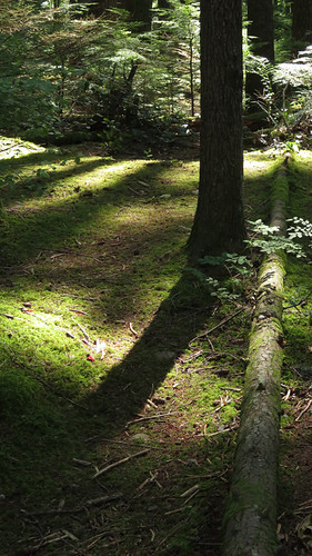 Forest shadows at Lynn Canyon Park in North Vancouver, BC