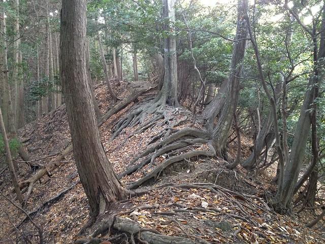 朝倉山 大谷池ルート 木の根尾根