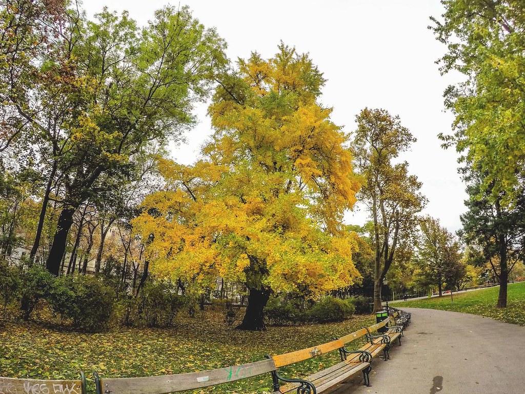 Stunning autumn yellow in Stadtpark, Vienna