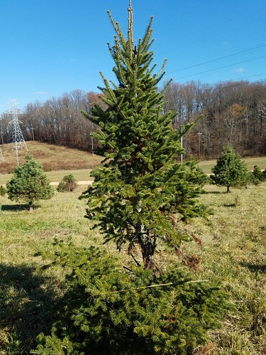 An Afternoon at the Christmas Tree Farm