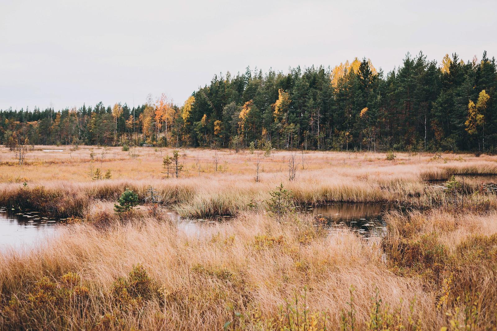Oktoberskog - Evelinas Ekologiska