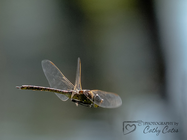 Dragonfly Mid-Flight