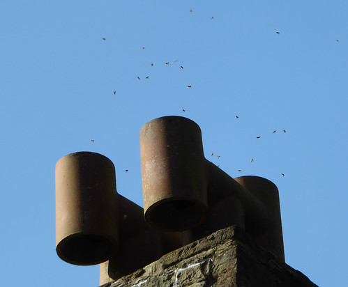 Bees in the chimney