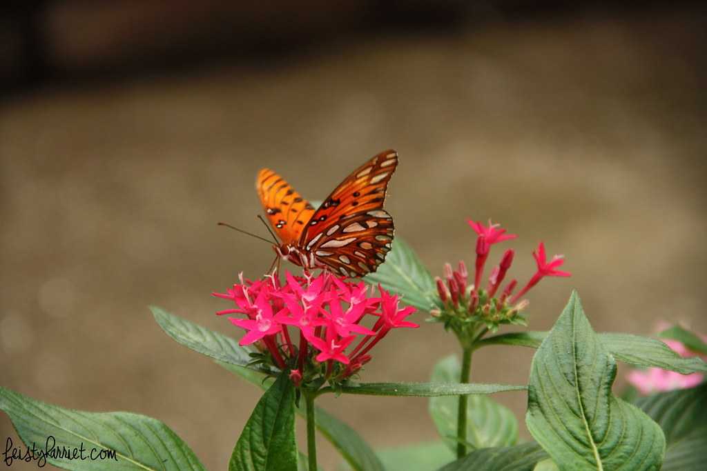 Boone Hall Butterfly Pavilion, South Carolina