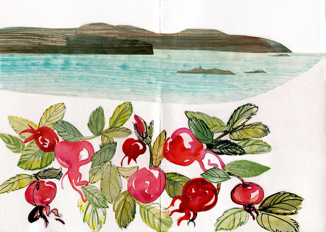 Wales, house at Ty Gwyn, rose hips in front garden and Ramsey Island beyond