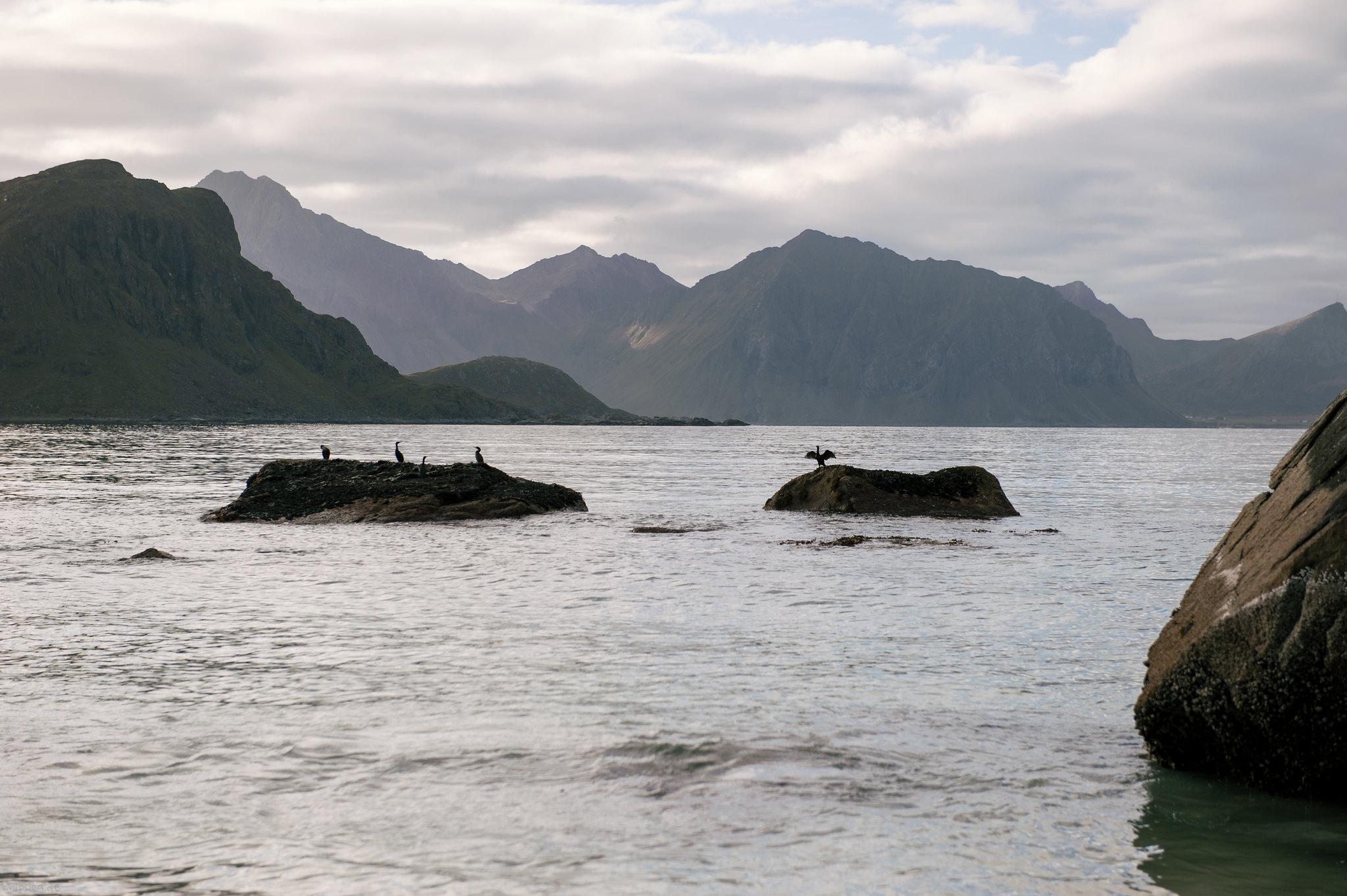 Cormorant rocks