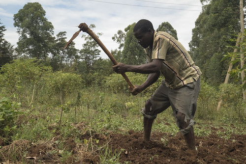 A farmer tills his land | by World Bank Photo Collection