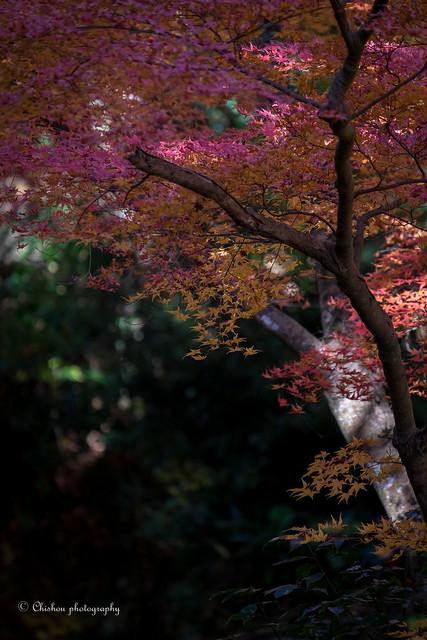 autumnal tints(2016)