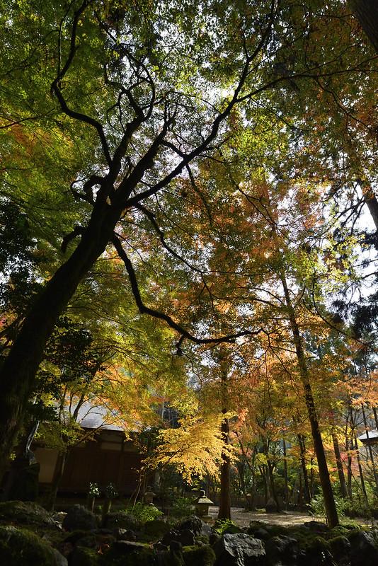 京都 高山寺 紅葉