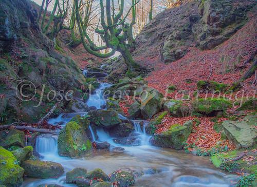 Parque Natural de Gorbeia   #DePaseoConLarri #Flickr      -2786