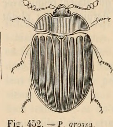 encyclopedie d'histoire naturelle