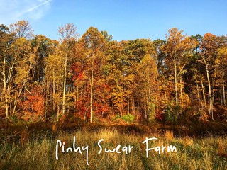 Beautiful scenery during my early am ATV ride thru my back 20. #maryland #fall | by RobynPorter1