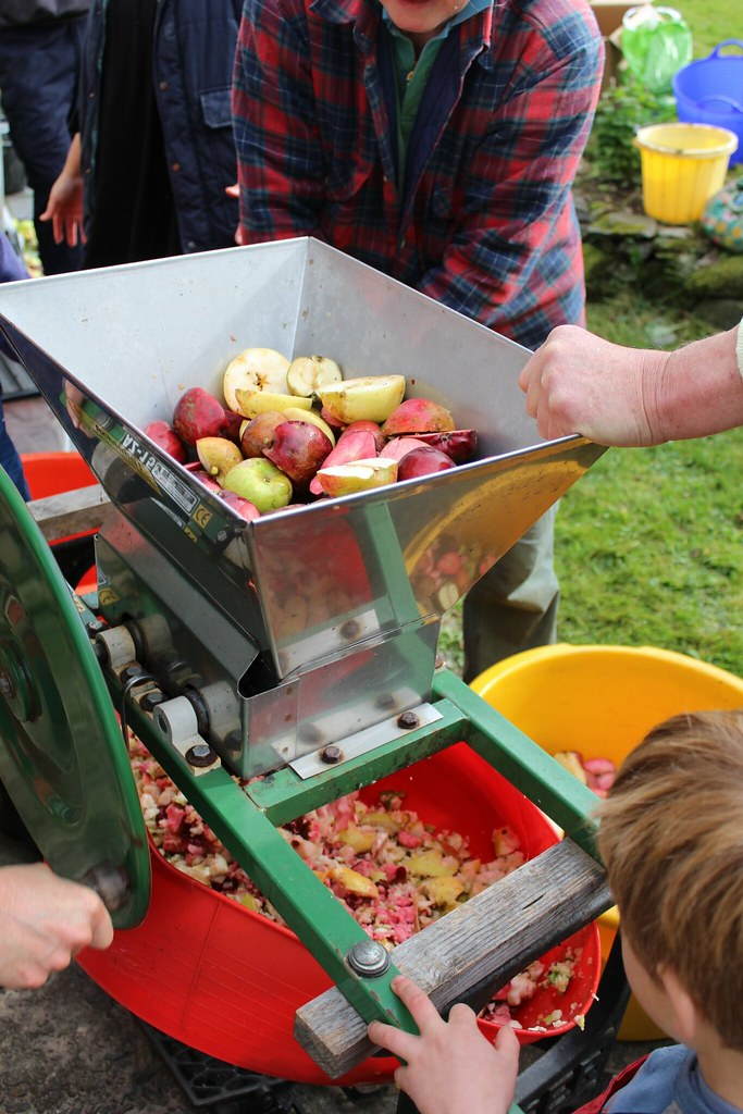 scratting apples with a scratter 5 permaculture apple day flickr