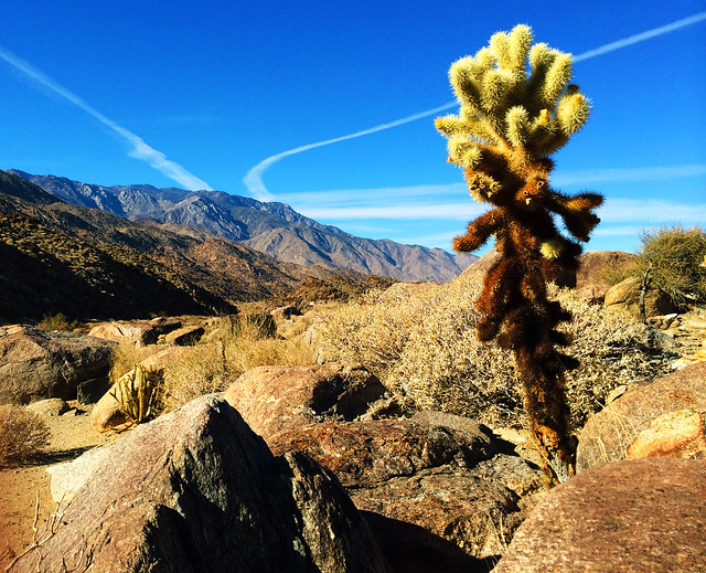 Palm Canyon Trail, CA, USA
