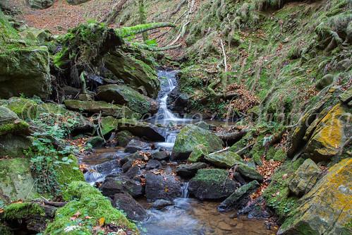 Parque Natural de #Gorbeia #DePaseoConLarri #Flickr      -1463