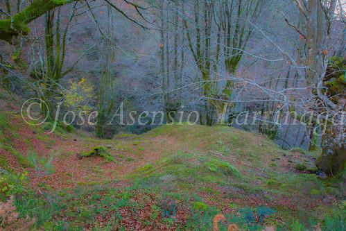 Parque Natural de Gorbeia #DePaseoConLarri #Flickr      -2827