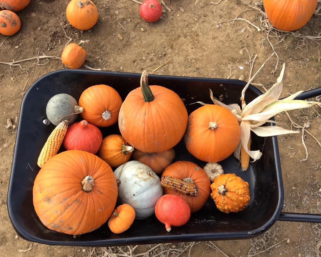 pick a pumpkin anne townshend flickr