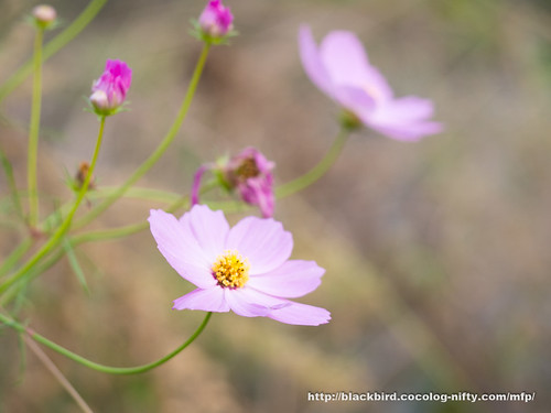 Flowers #03