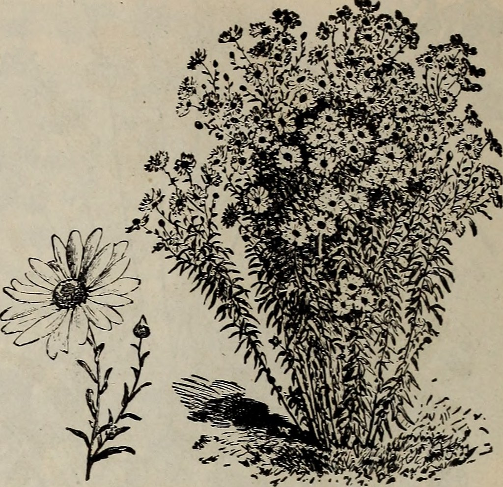 Image From Page 23 Of Spring Of 1897 Semi Annual Trade Flickr