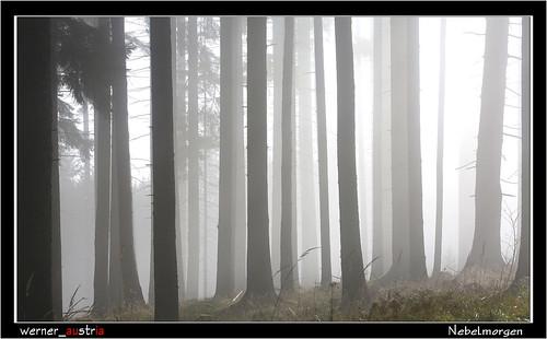 11-16 6555_Nebelmorgen