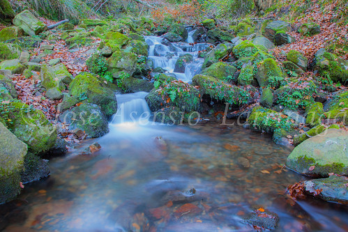 Parque Natural de Gorbeia #DePaseoConLarri #Flickr      -2813
