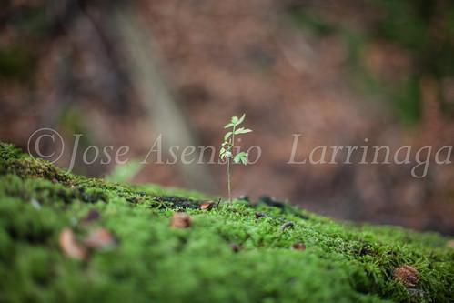 Parque Natural de #Gorbeia #DePaseoConLarri #Flickr      -1480
