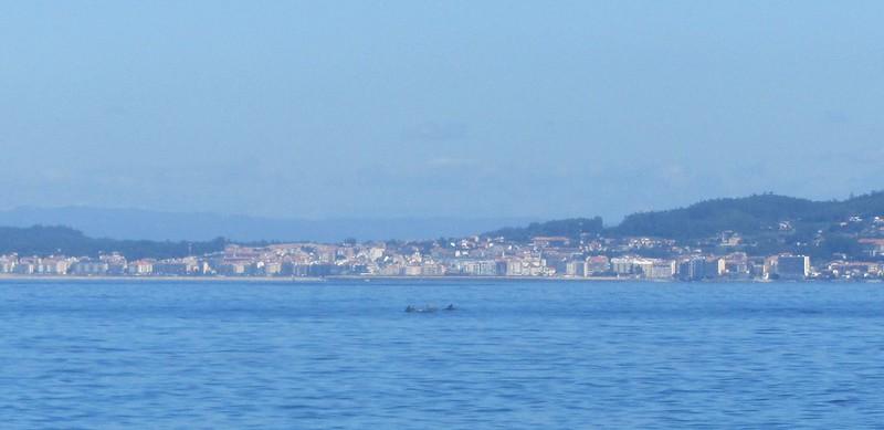 Delfines en Sanxenxo