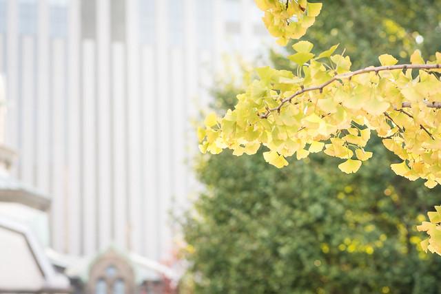 ニコライ堂とイチョウの木。少しハイキー気味に撮る