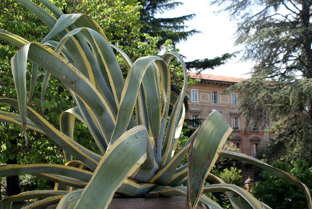 La nature et la magie des formes dans le jardin Margherita à Bologne.