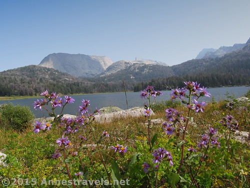 Wildflowers at Big Sandy Lake, Wind River Range, Wyoming