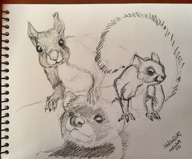 Squirrel study