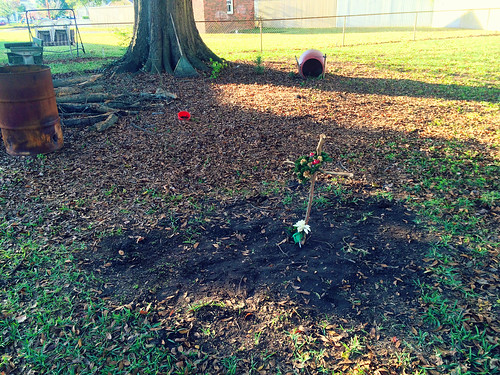 Dotty's Grave that I Dug Up (Nov 13 2015)