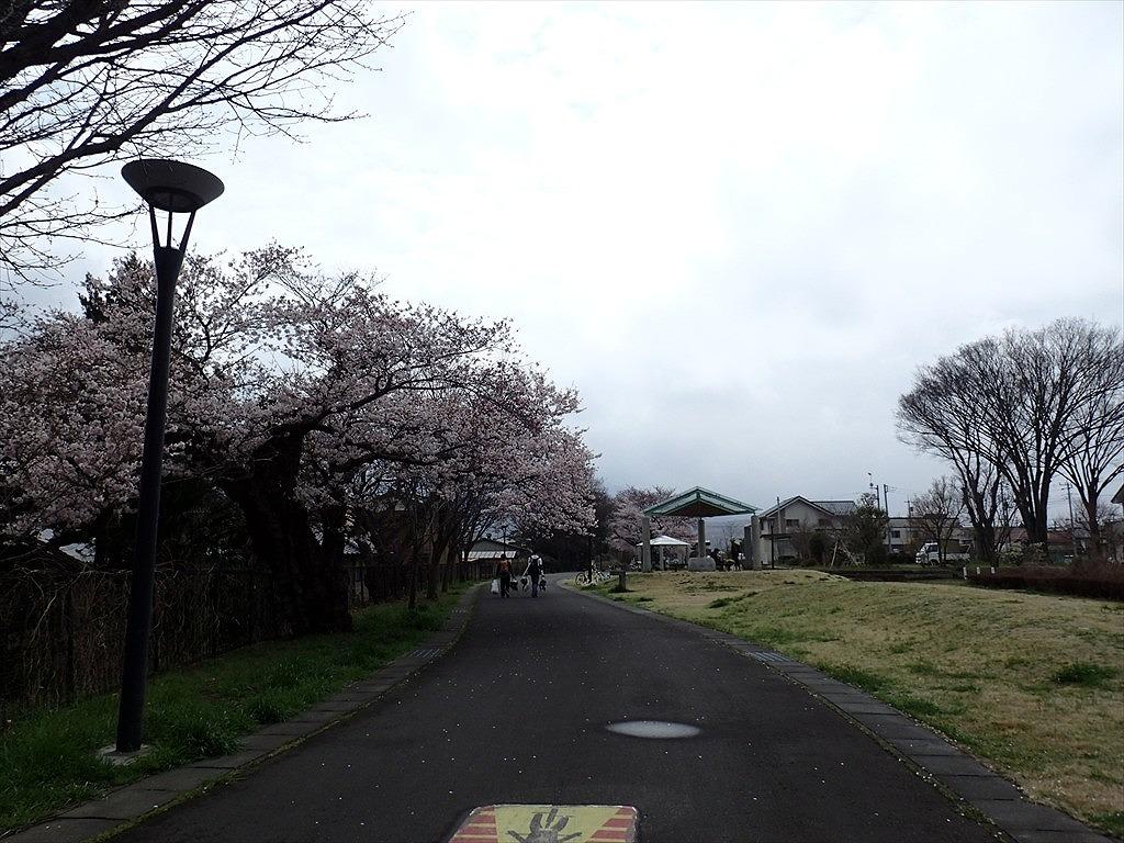 2016春りんりん (7)