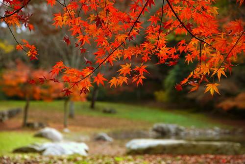 Autmn Leaves at Nishigori-park