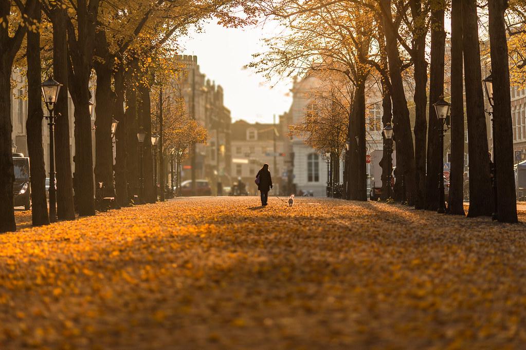 25  best Autumn in new york ideas on Pinterest