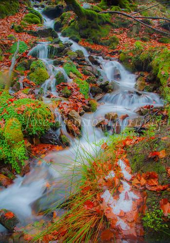 Parque Natural de #Gorbeia #DePaseoConLarri #Flickr      -1964