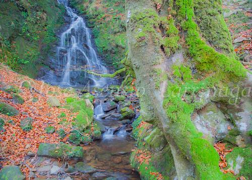 Parque natural de Gorbeia #DePaseoConLarri #Flickr      -2057