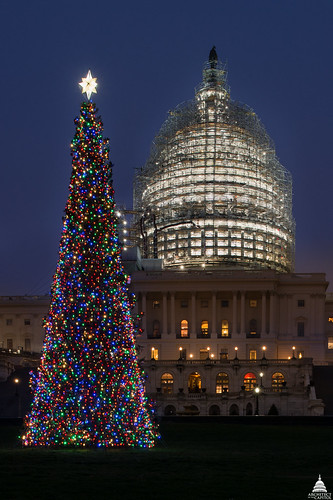 2015 U.S. Capitol Christmas Tree | by USCapitol