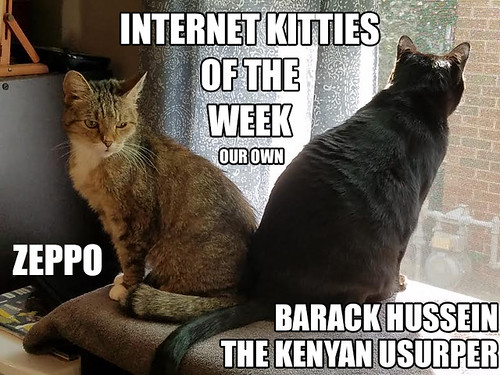 IKOTW zeppo and barack 10-21
