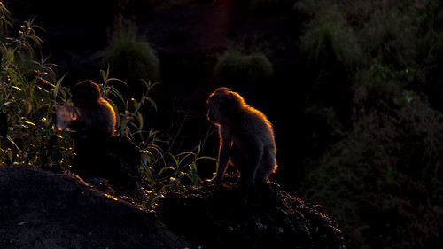 Sunrise Monkey | by ShaunDhani