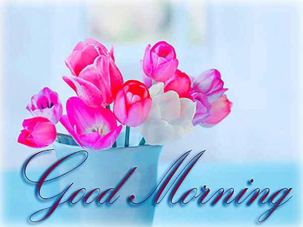 Good morning best cards animated pics messages flickr by greetingsday good morning best cards animated pics messages by greetingsday m4hsunfo