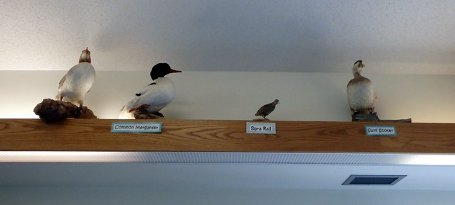 four stuffed birds on a high shelf