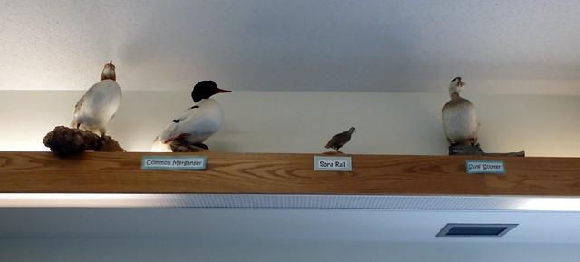 four stuffed birds on a high shelf