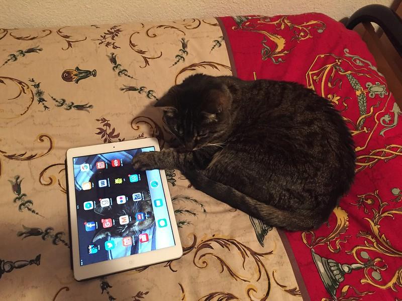 Tabby and the pawpad