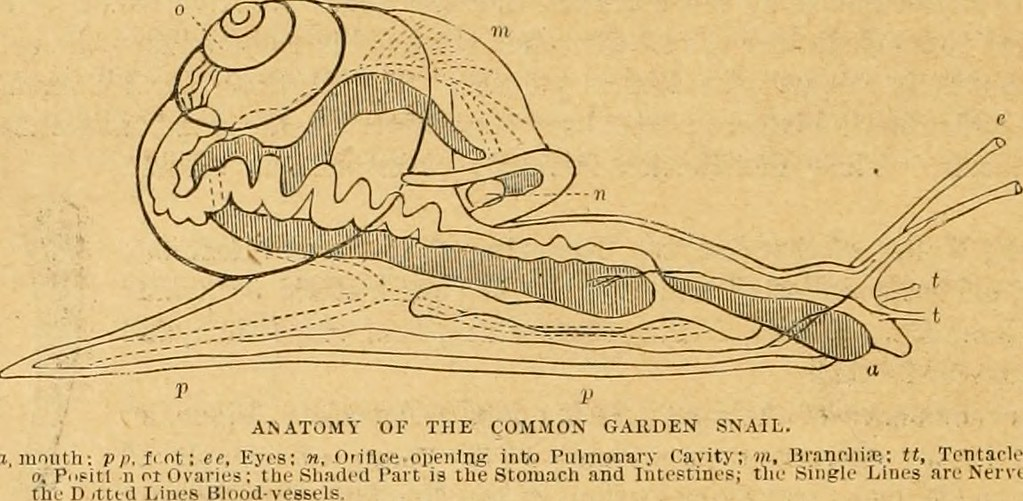 Image From Page 245 Of Cassells Natural History 1896 Flickr